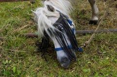 Detail van ezelssnuit op een gebied Stock Afbeeldingen