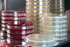 Detail van fornuis met platen en cultuurmedia van het laboratorium stock foto's