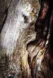 Detail van gebroken droog hout Stock Foto's