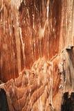 Detail van gebroken stompsparren Stock Fotografie