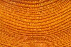 Detail van gesneden boom stock afbeelding