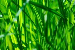 Detail van groen gras stock fotografie
