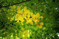 Detail van groene bladeren in de herfstbos stock foto