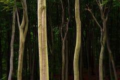 Detail van heldere boomstammen Royalty-vrije Stock Fotografie