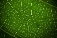 Macro groen blad Royalty-vrije Stock Afbeelding