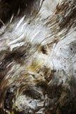 Detail van het oude hout met verrotting stock fotografie