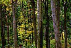 Detail van jonge gele boom Stock Afbeelding