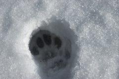 Detail van kattenspoor in de sneeuw Royalty-vrije Stock Afbeeldingen