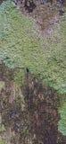 Detail van mos en korstmos op omheining stock foto's