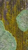 Detail van mos en korstmos op omheining stock afbeeldingen