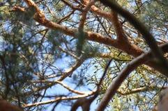Detail van nette takken in bos royalty-vrije stock foto