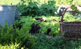 Detail van organisch tuinbed met salade Stock Afbeeldingen