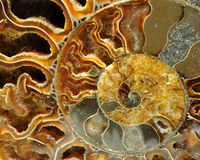 Detail van oud fossiel Stock Fotografie
