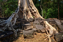 Detail van oude boomwortels en tempelruïnes in Angkor Wat Royalty-vrije Stock Foto