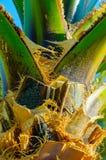 Detail van Palmtree royalty-vrije stock afbeeldingen