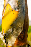 Detail van Palmtree royalty-vrije stock foto