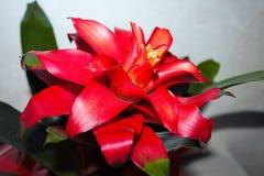detail van rood-gekleurde bloem royalty-vrije stock afbeelding