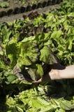 Detail van salade in een mand Royalty-vrije Stock Foto
