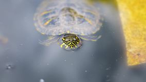 Detail van schildpad in water stock videobeelden