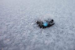 Detail van sneeuwvlokken op auto Stock Fotografie