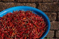 Detail van Spaanse pepers die bij de zon in een straat van Chiang Mai, Thailand drogen stock afbeeldingen