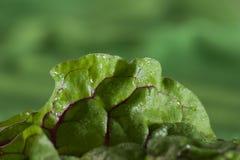 Detail van spinazie Royalty-vrije Stock Afbeelding