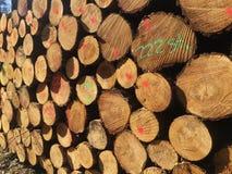 Detail van stapel van gesneden houtlogboeken - registreren, bosbouwachtergrond royalty-vrije stock foto