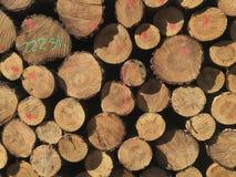 Detail van stapel van gesneden houtlogboeken - registreren, bosbouwachtergrond stock foto