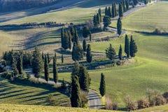 Detail van toneeldieweg door cipresbomen in het Toscaanse platteland dichtbij Monticchiello, Siena, Italië wordt gescherpt stock foto's