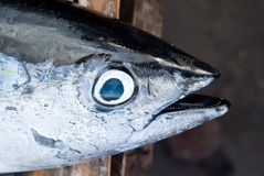 Detail van tonijnvissen Stock Afbeelding