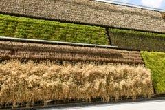 Detail van verticale gewassen in Israel Pavillion, EXPO 2015 Milaan Royalty-vrije Stock Foto's