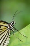 Detail van vlinder Stock Afbeelding