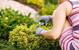 Detail van vrouwenhand het tuinieren royalty-vrije stock afbeelding