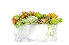 Red and green succulent flowering houseplant arrangement in marble planter white background stock photos