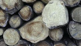 Detail view a big pile of trunks, trees. Firewood a heap. stock video footage