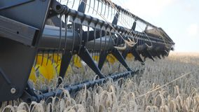 Detail view on knife of combine spinning and cutting yellow ears of wheat. Grain harvester riding through field and. Gathering crop of ripe barley. Concept of stock video