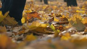 Detail view of male foot stepping on color fallen leaves. Man walking at autumn park on yellow foliage. Guy goes kicking. Up dry maple leaves. Slow motion Close stock video footage