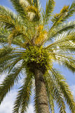 Detail view of palmtree top stock image