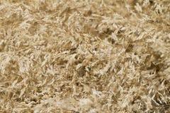 Dry vegetation. Detail view of some dry vegetation of the summer season Stock Image