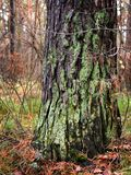 Detail view of some green moss and little plants on the bark of a tree. royalty free stock photography