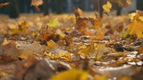 Detail view on yellow maple leaves falling to ground in autumn park. Ground covered with dry vivid foliage. Colorful. Nature background. Slow motion Close up stock video