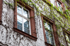 Detail of Vine Covered Building Facade Stock Photography