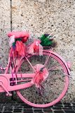 Detail of vintage pink and violet colored bicycle decorated with lavender flowers and lilac ribbons deco. Against a light color stone wall background on a Royalty Free Stock Photo