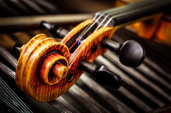 Detail of violin head with string background Royalty Free Stock Photo