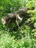 Detail vom Sumpf Stockfoto