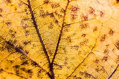 Detail von Adern des gelben Blattes Lizenzfreie Stockfotos