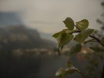 Detail von Blättern Stockfotos