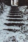 Detail von den Schritten umfasst im Schnee während des Sturms Emma, alias im Tier vom Osten Stockbilder