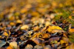 Detail von gefallenen Blättern im Herbst Lizenzfreies Stockbild
