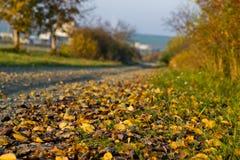 Detail von gefallenen Blättern im Herbst mit undeutlichem Weg und von Bäumen im Hintergrund Stockbild